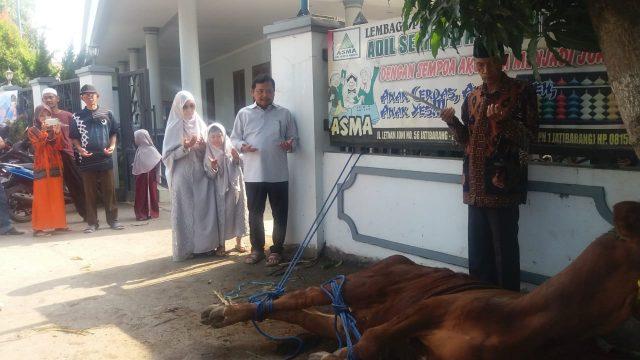 Idul Adha 1440 H 2019 M, Hero Kurban Lima Sapi dan Sembilan Kambing